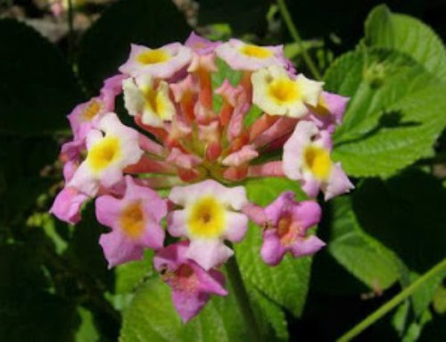 What are the differences between Indigenous, Endemic, Exotic and Alien Plants